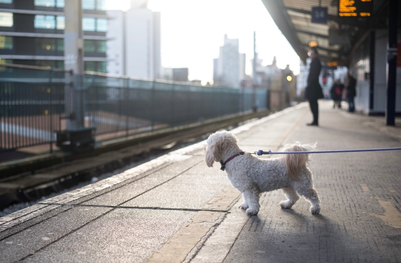 Dog at train station